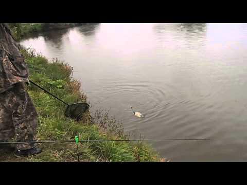 прогноз клева в курске стоит ли ехать на рыбалку