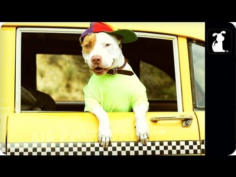 Fresh Prince of Bel Air - Fresh Pup of Bel Air - Parody