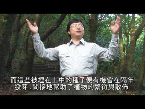 陽明山國家公園_赤腹松鼠