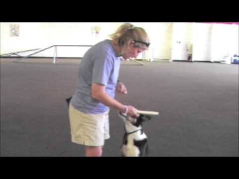 Villa La PAWs - Cool Dog Tricks - Retrieving