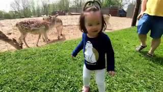 Vlog 22 | BÉ CHƠI VỚI CÁC CON VẬT | Hươu sao | Bé tập nhận biết Con vật