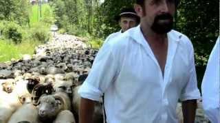 Redyk w Leśnicy