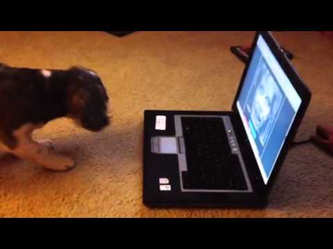 Dog Reacts to Maze Game