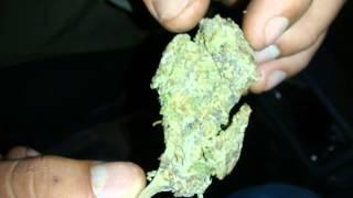 Weed in Peru 4