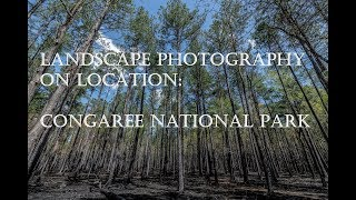 Landscape Photography - Congaree National Park