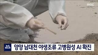 월투) 양양남대천 조류독감 발생, 차단방역 강화