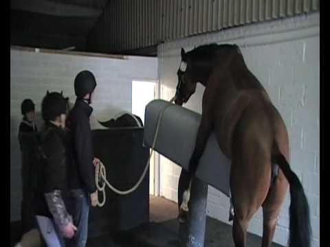 dummy mare and allow us to collect semen using an artificial vagina
