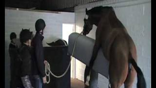 Stallion semen collection - Equine Reproduction UK