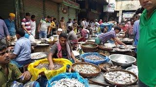 Wondrous Fish Market | Biggest Fish Market In Old Dhaka Bangladesh