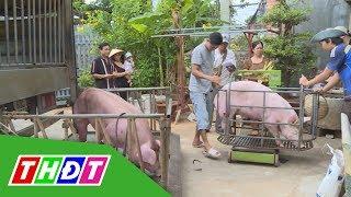 Xây dựng chuỗi giá trị bền vững cho ngành chăn nuôi | THDT