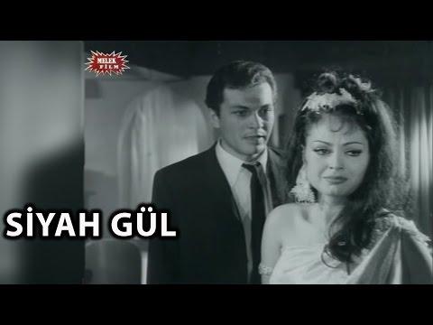 Siyah Gül (1966) - Türkan Şoray & Kartal Tibet - Tek Parça İzle