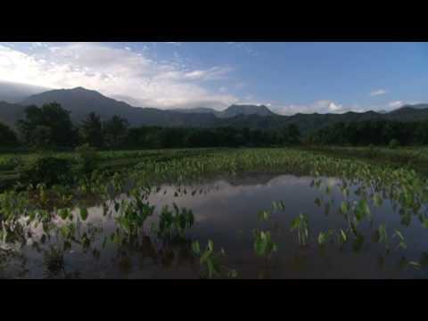 Waipā Project — Huaka'i 'Āina Ho'oilina (4/10)