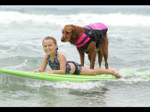 Surf Dog Ricochet Surfs With A Six Pack Of Kids! video
