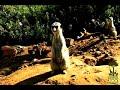 Reindeer Romp TV Commercial