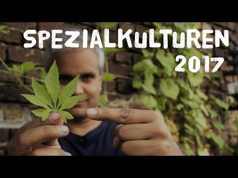 Spezialkulturen 2017 - 6 Nutzpflanzen vorgestellt