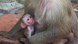Broken Heart When See Cute Baby Pigtail Carter Do Bad On Newborn Baby Pigtail Monkey Kinky / PTM 415