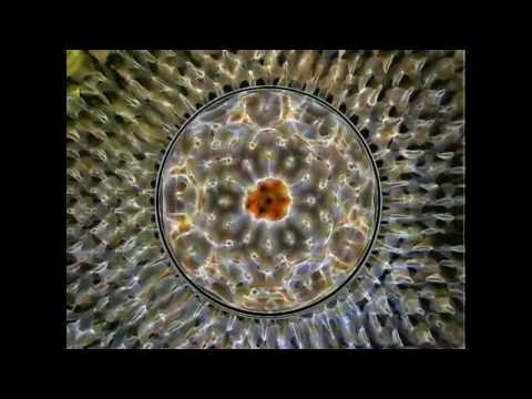 30 Minutes Hypnotize, Hallucinate - Harmonics of 40Hz Entrainment  (HQ HEADPHONES REQUIRED)