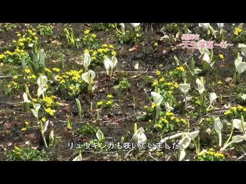 飛騨市 「天生湿原」 ~春~