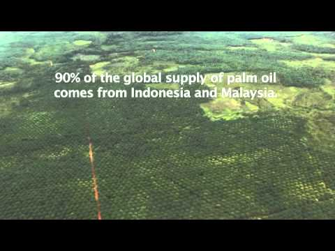 Palm Oil Plantations and Deforestation in Borneo -- View from the Sky