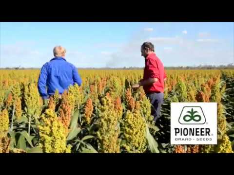 Andrew Arthur of Goondiwini, Qld impressed with Pioneer® brand G33