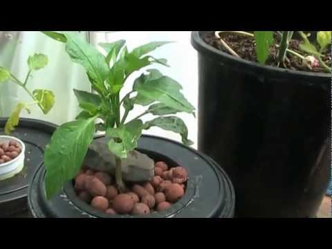 Hydroponics for Beginners.Easy DIY System
