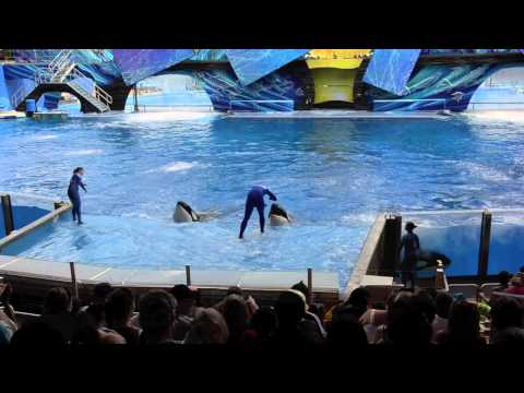 The Complete Shamu Show @ Sea World Orlando Florida 2012 Filmed By Yvan Mayfair