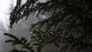 Relaxing Forest Rain Sounds For Sleeping Relax Study 6 Hours Sounds Of Rain