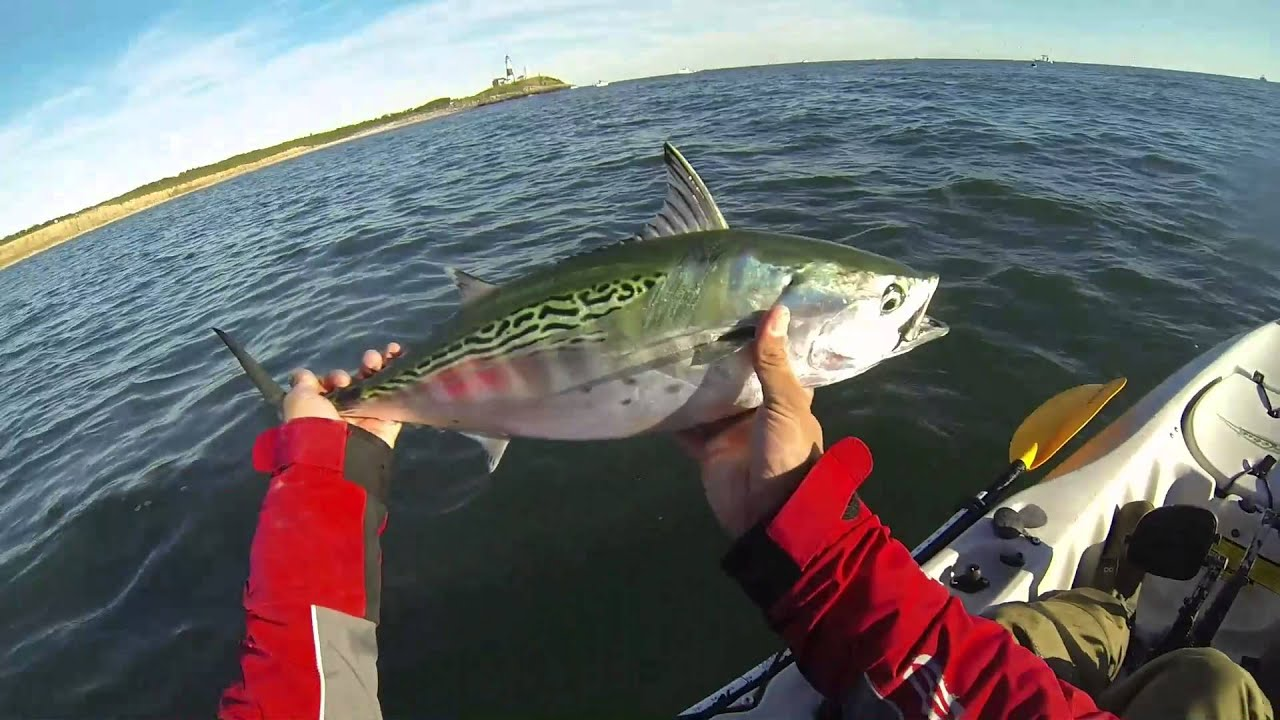 Year in review 2013 surf and kayak fishing nj youtube for Surf fishing nj
