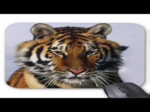 Tigers Pad Sunningdale Berkshire