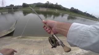 Fly Fishing in the Rivers of Hong Kong - Part 1: Tarpon & Carp in PlainRiver