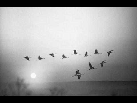 Военные, армейские песни - Журавли