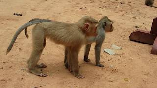 Just small one why do like this baby monkey in Amber group | Very lovely & funny small monkey