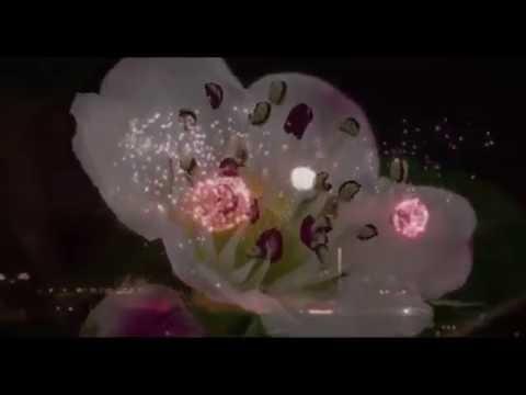 Fleur - Шиповник