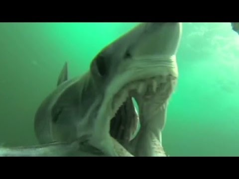 Mako shark attacks GoPro camera mounted in fish rig
