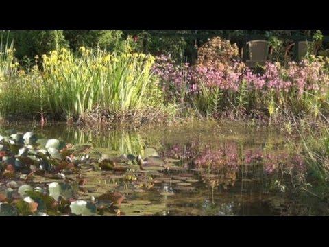 Pflegeplan Für Teiche - Das Tagebuch Für Alle Aufgaben Am Gartenteich
