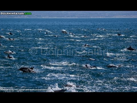Thousands of Wild Dolphins Engulf Dana Point Whale Watching Safari Boat