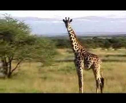 african animals getting drunk