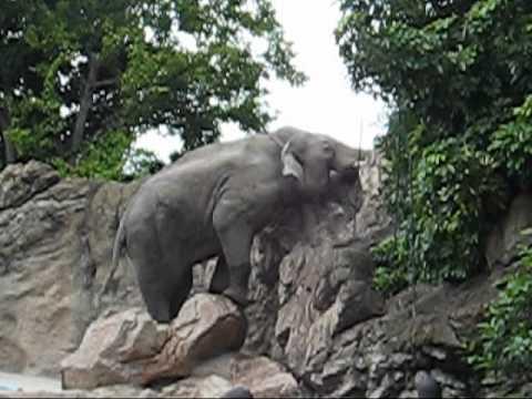 上野動物園アジアゾウ_アティの大脱走計画