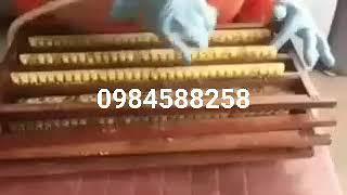 Quy trình thu hoạch sữa ong chúa Thu Hiền
