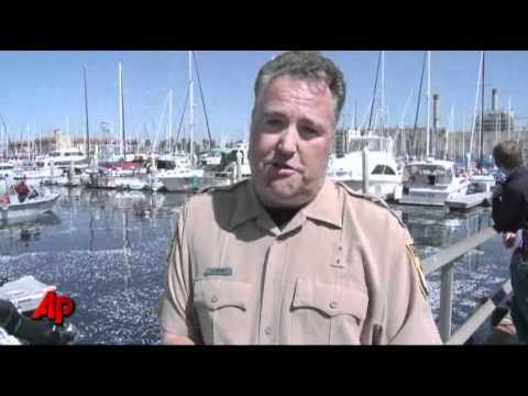 Mass Fish Death Fouls California Marina
