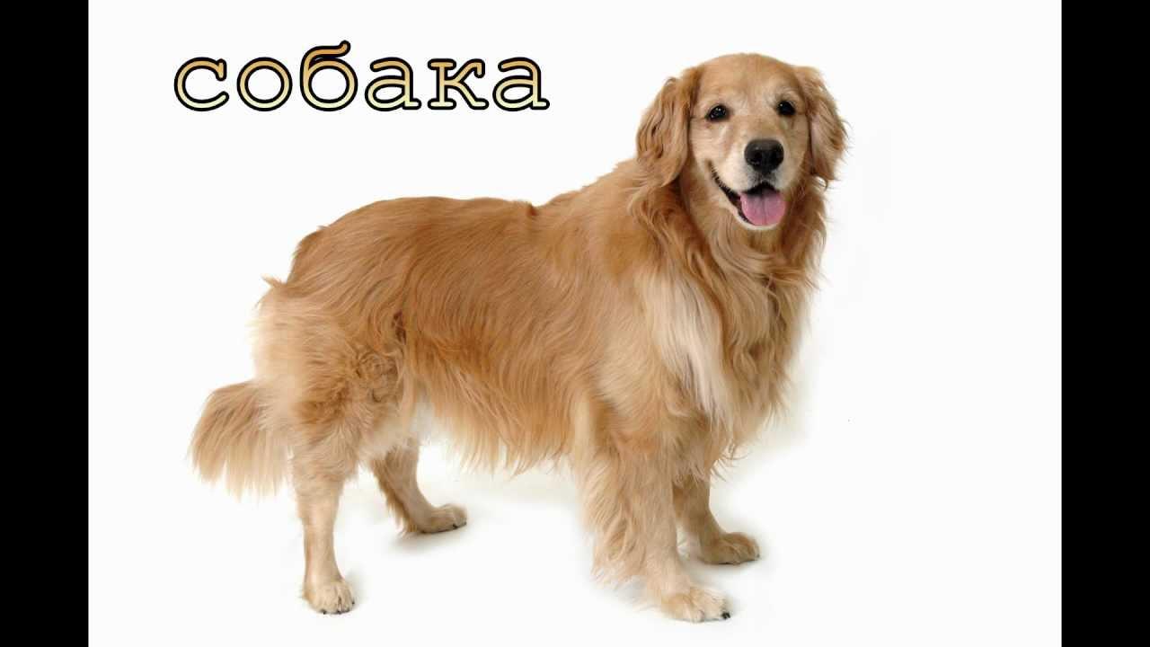 картинки домашних животных: