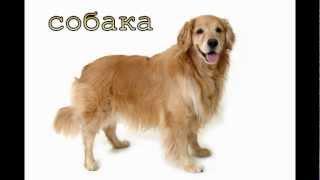 Голоса домашних животных для детей