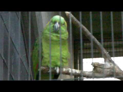 王子動物園 ボウシインコ 「おはよう」