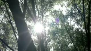 Up with the Birds - Coldplay (Subtitulado en Español)