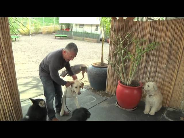 Cesar&#039;s Dog Training Video: Aggression During Feeding