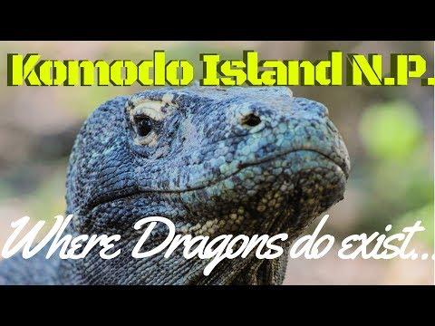 Komodo Island Where Dragons Still Exist