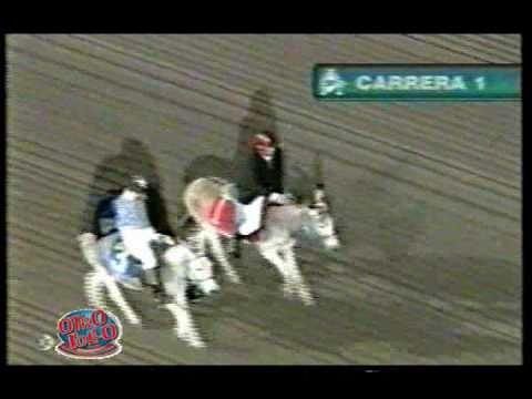 Otro Rollo: Carrera de caballos en el Hipódromo de las Américas