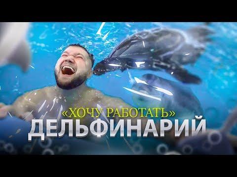ЭТИ ЖИВОТНЫЕ ПОЗВОЛЯЮТ СЕБЕ ВСЁ! Хочу работать в дельфинарии | Дельфинотерапия