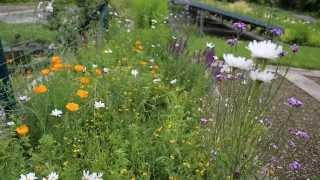 Gartenakademie: Blühstreifen im Biogarten