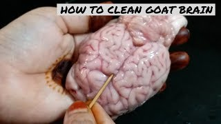 How To Clean Goat Brain | Brain Cleaning| How To Remove Veins & Clean Brain Easily By Ayesha's World